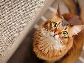 Preventing Cat Spraying
