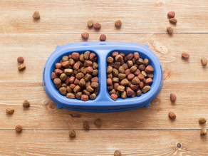 Is Grain-Free Right For My Dog?