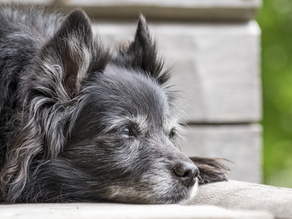 Caring for Your Aging Pet