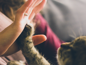 Bonding With Your Cat