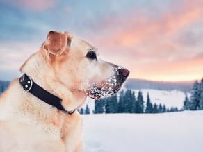 Winter Pet Care