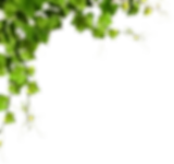corner-transparent-leaf.png