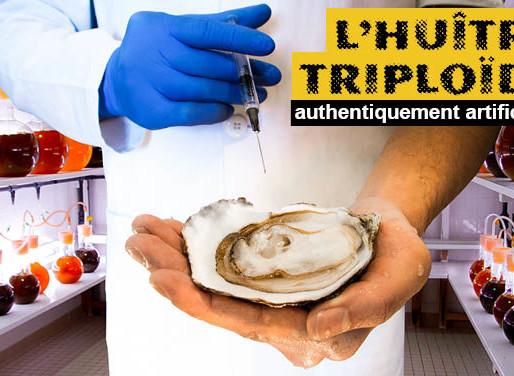 🐚 Les huîtres : le danger des triploïdes