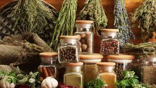 🌿 Les herbes médicinales utilisées au Moyen âge