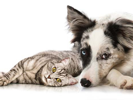 How toprotect your pet from an uncertain future if you aren't here.