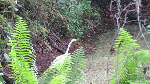 Video on the wildlife refuge center