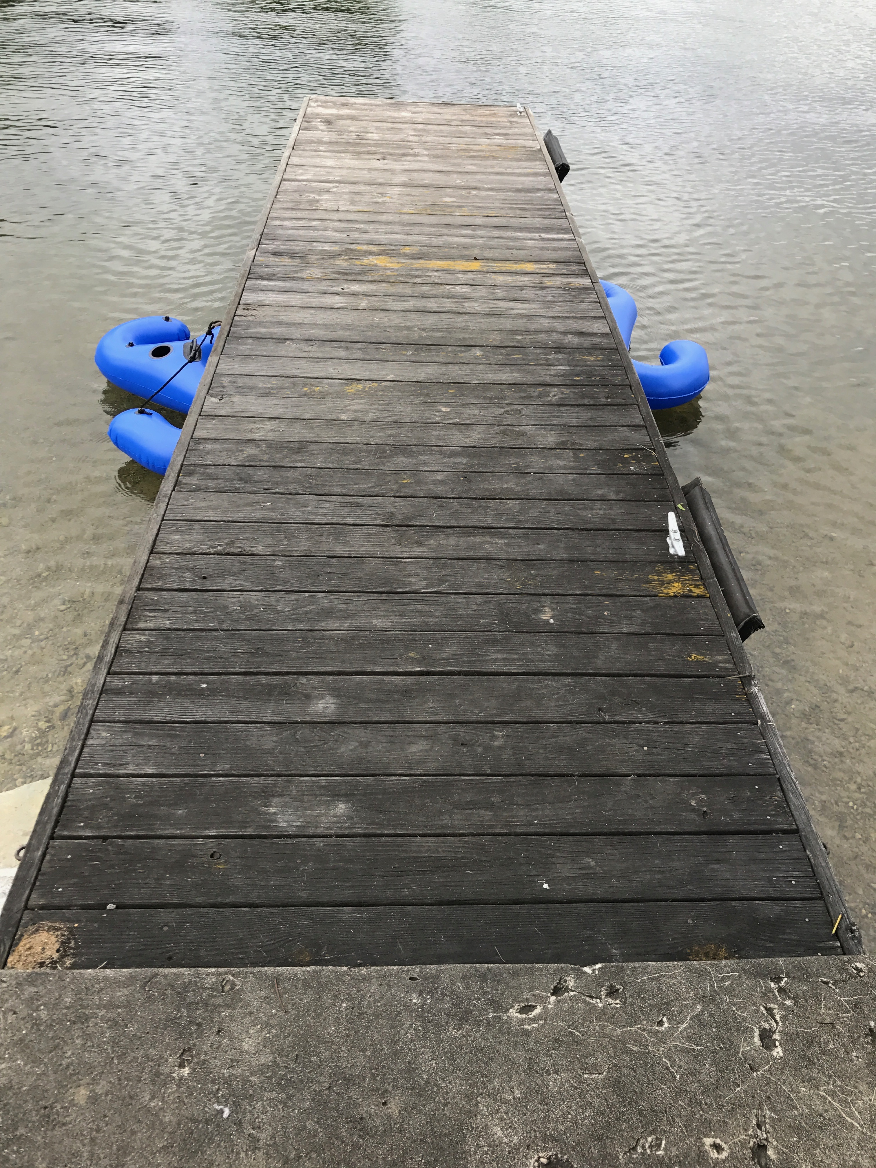 Extremely Neglected Mildew Dock
