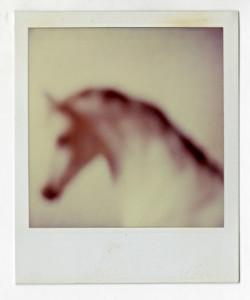 A Unicorn's Fade Out