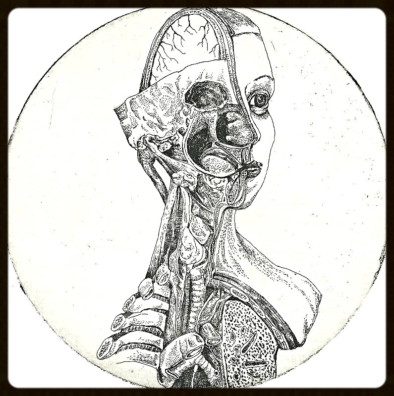 Anatomical Venus XVII. January, 2014