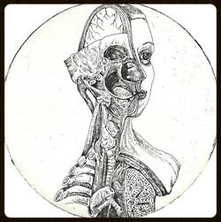 Anatomical Venus XVII. January, 2014