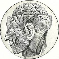 Anatomical Venus XVIII. February 2014