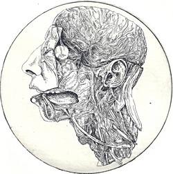 Anatomical Venus XXI. March, 2014