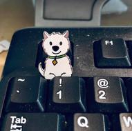 Westie Pin on keyboard