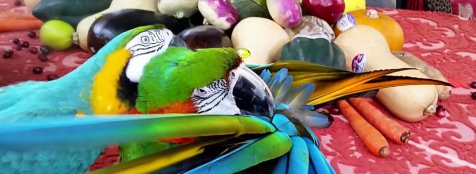 parrot rescue.JPG