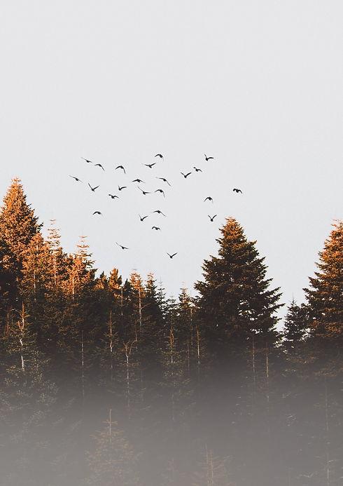 flock-of-birds-917494_edited_edited.jpg