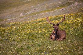 Elk rocky mountains audio driving tour
