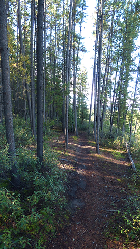 Yukon Trees audio walking tour