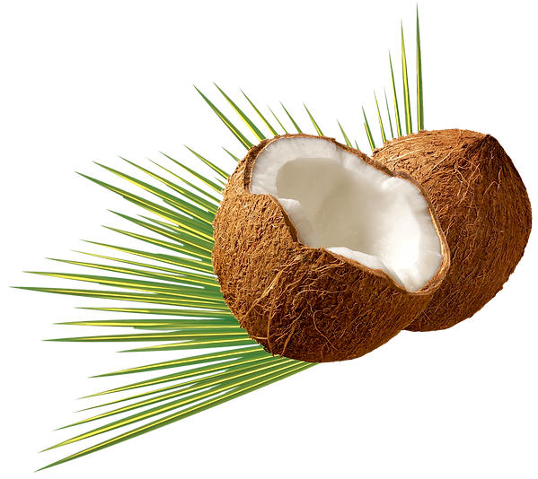 Coconut-PNG-image.png