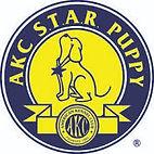 star puppy.jpg