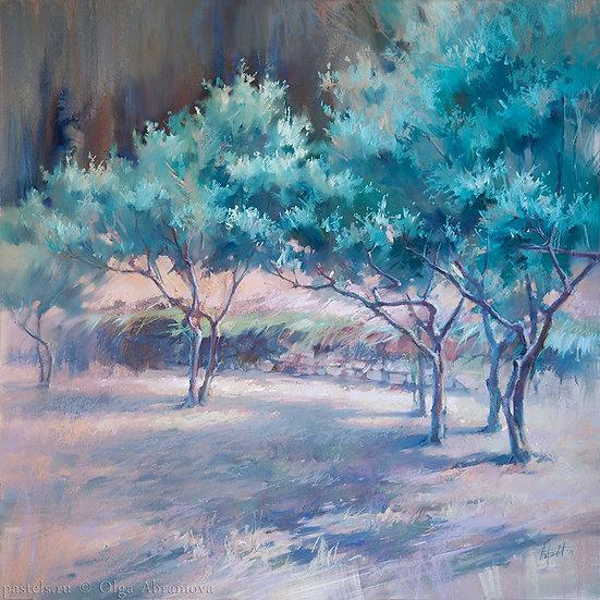 Оливы. Вантебрен Olive trees. Vantebren 80x80. 2017
