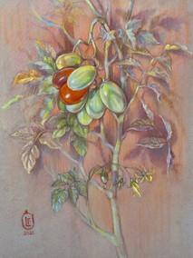 90. Помидоры / Tomatoes 40x30 cm, 2019