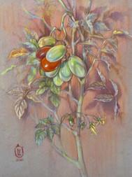 90. Tomatoes / Tomatoes 40x30 cm, 2019
