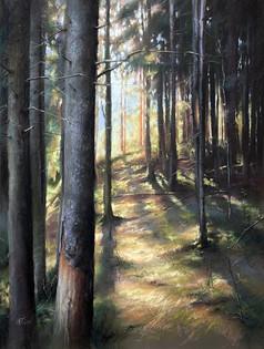 """188. Эко тропа """"Колтушские высоты"""" / Eco trail """"Koltushskie vysoty"""" 62x47 cm, 2020"""