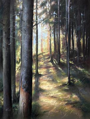 "188. Eco trail ""Koltushskie vysoty"" 62x47 cm, 2020"