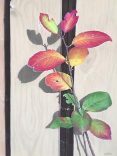 91. Веточка / Twiglet 40x30 cm, 2019