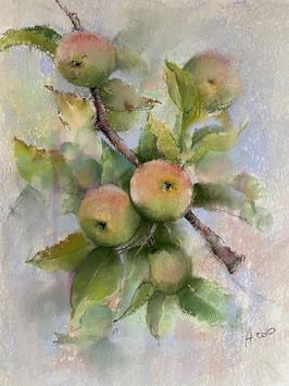 040 Яблоня / Apple Tree 29x42.jpg cm, 2020