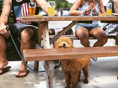 Dog-Friendly Breweries in Maryland