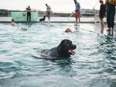 End-of-Summer 2021 Dog Swim Events
