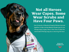 Not all Heroes Wear Capes. Some Wear Scrubs and Have Four Paws.