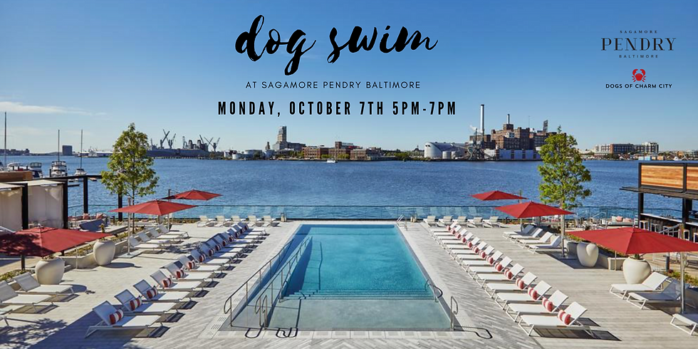 Dog Swim at Sagamore Pendry Baltimore - SOLD OUT
