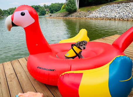 12 Places For Your Dog to Go Swimming in Maryland