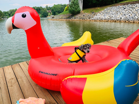 13 Places to Take Your Dog Swimming in Maryland