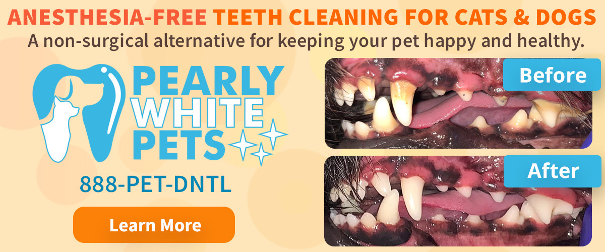 pearly white pets.jpg