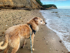 9 Dog-Friendly Hikes in Maryland