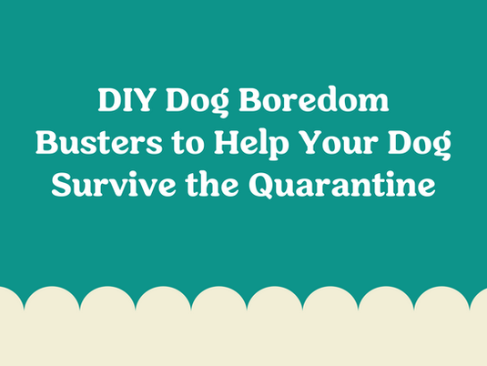 DIY Dog Boredom Busters to Help Your Dog Survive the Quarantine