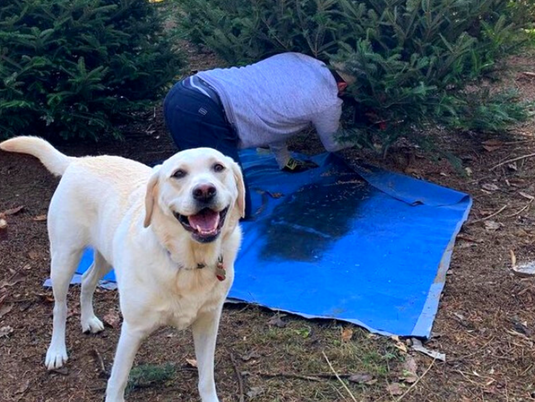Dog-Friendly Christmas Tree Farms in Maryland