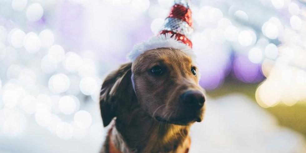 Paws n' Claus: Enchant Christmas DC