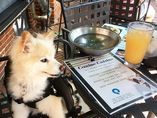 Top Dog-Friendly Brunch Spots in Baltimore