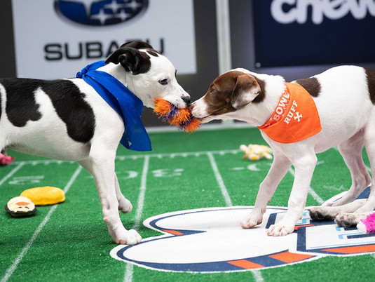Puppy Bowl 2021: Everything You Need to Know
