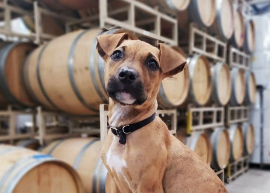 Dog-Friendly Wineries & Vineyards in Maryland
