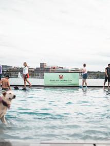 dogs of charm city sagamore pendry dog swim
