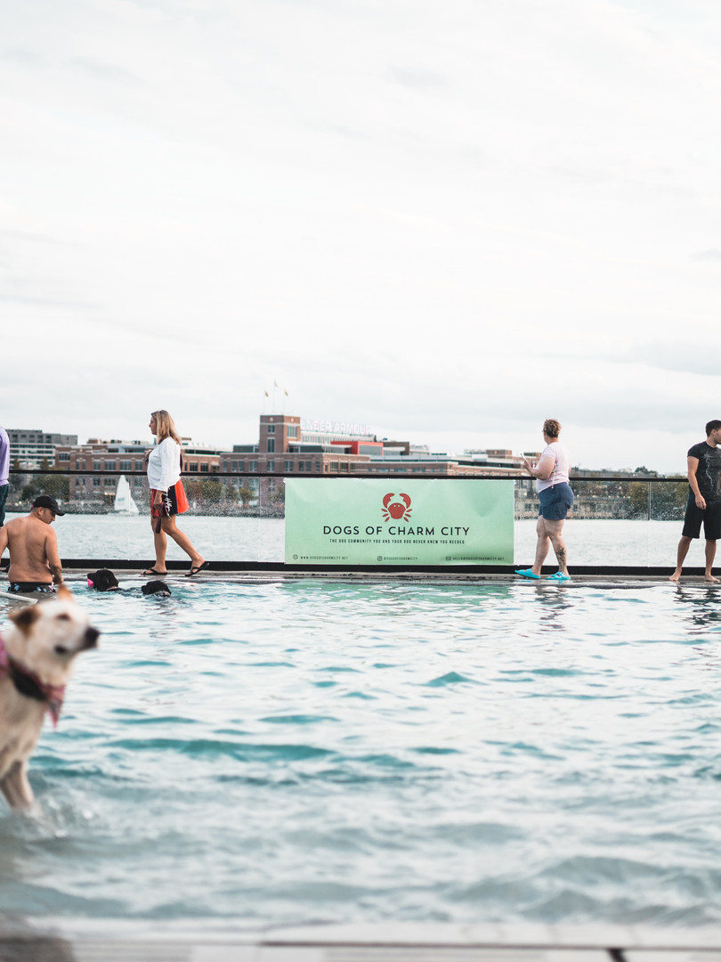 dogs of charm city sagamore pendry dog swim