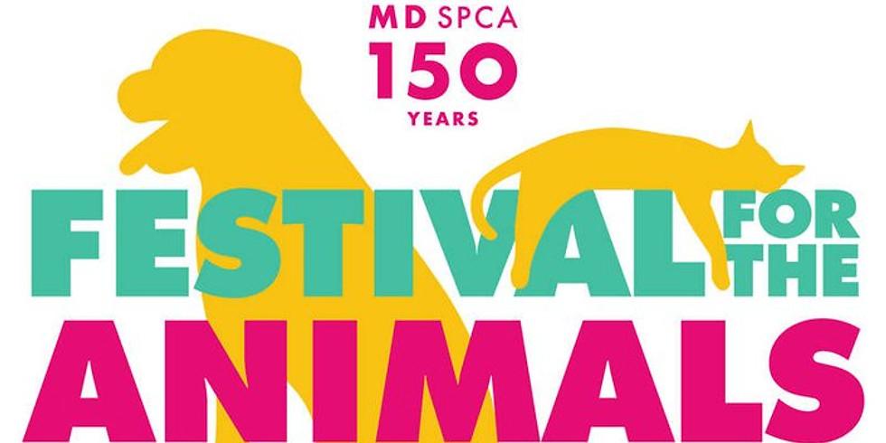 SPCA Festival for the Animals
