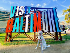 The Ultimate Checklist for New Dog Owners in Baltimore