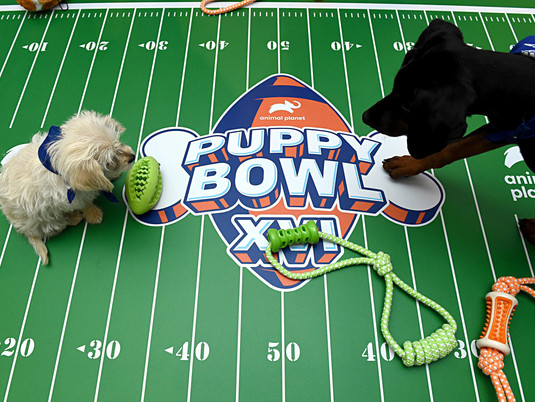 Puppy Bowl XVI: Everything You Need to Know