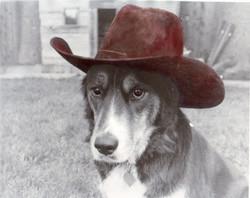rosco in cowboy hat